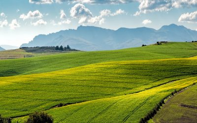 """Smart Agriculture project in Salerno (Italy) to monitor """"baby leaves"""" fourth-generation vegetables production for an efficient use of fertilizers and irrigation"""