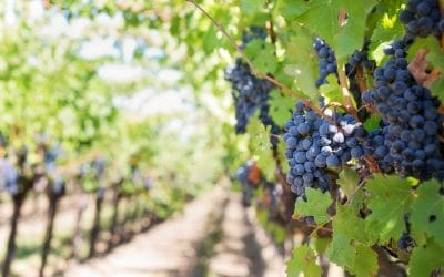 The first Smart Vineyard in Lebanon chooses Libelium's technology to face the climate change