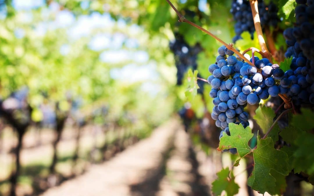 New vineyard project developed with Libelium IoT platform on Agrotech, the app for crop management, powered by Efor and Ibercaja on Microsoft Azure