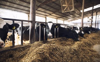 IoT, Business Intelligence and Blockchain technology reduces methane emissions in a cattle farm